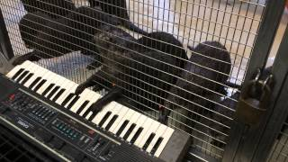 This Is Unbelievably Cute: Otters Play The Keyboard!