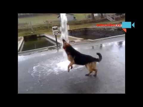 Vodní pes