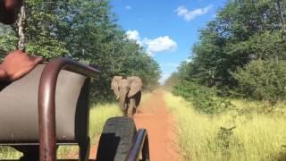 Elephants & Anti-Poaching dogs