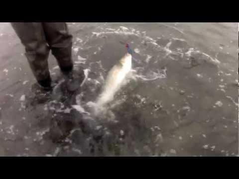 Blue Fish and Striped Bass – Top Water Plugs