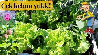 Video Buahnya melimpah ruah tahun ini..sayurannya seger-seger banget!! MP3, 3GP, MP4, WEBM, AVI, FLV Mei 2019
