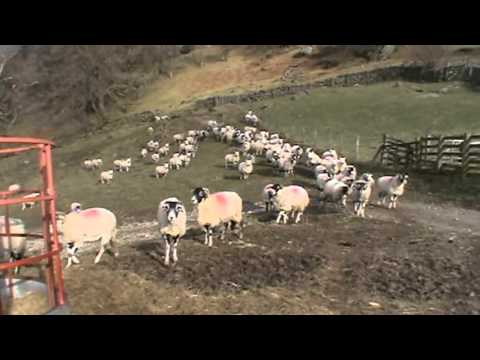 Ullswater   Patterdale to Hartsop round | cumbria  Walks