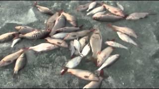 Балхаш Весенняя рыбалка