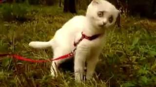 This kitten eats some grass, and is very surprised by its grassy goodness!
