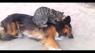 El gato masajista