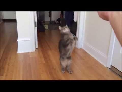 Житие и битие на една обикновена котка