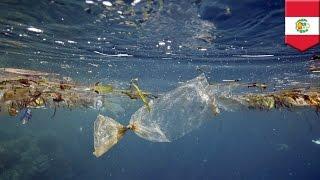 アシカ500頭の死因は「太平洋ゴミベルト」?
