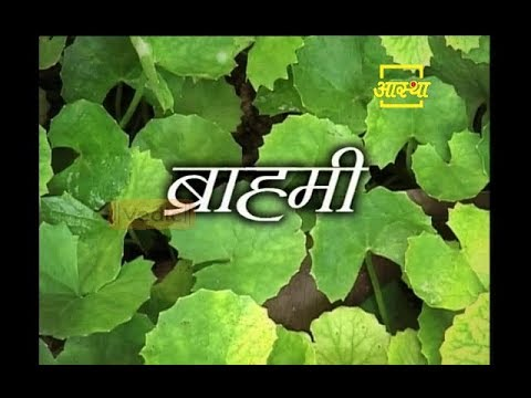 Health Benefits of Brahmi Plant