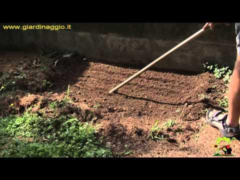 i segreti per coltivare il basilico