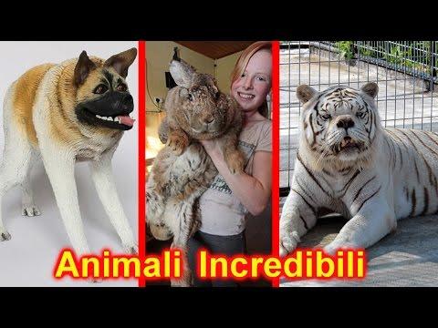 10 animali fantastici che non crederai esistano davvero!