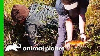 Learning To Catch Fish By Hand Using Traditional Techniques | Fish or Die by Animal Planet