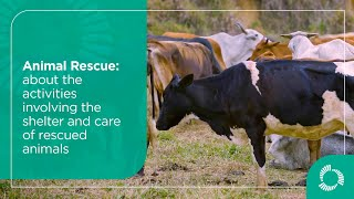Animal Rescue: about the activities involving the shelter and care of rescued animals