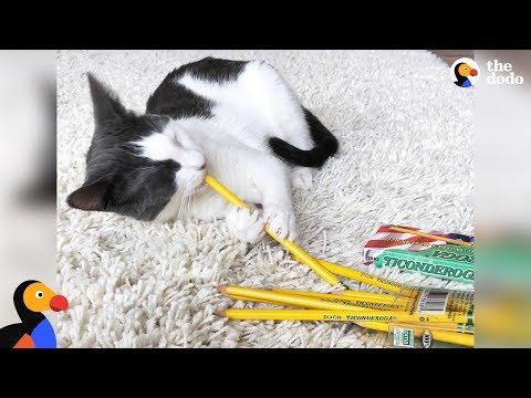 il-gatto-e-le-matite
