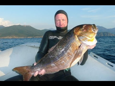 Pescasub: Dentice 7,8 chili Spearfishing Pesca sub