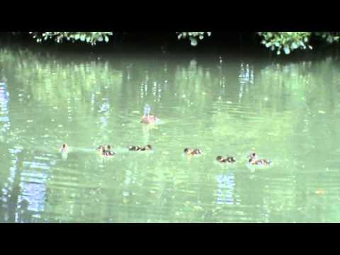 Barlow Common Nature Reserve | north yorkshire  Walks