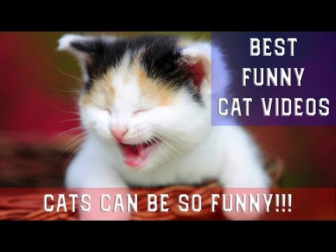 Funny Cat Videos - Best Funny Cats Video 2019
