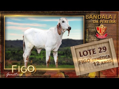LOTE 29 - BANDALA I DA PEREIRA