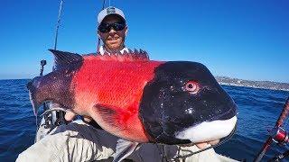 Video Kayak Fishing for California Sheephead | #FieldTrips West Coast MP3, 3GP, MP4, WEBM, AVI, FLV Oktober 2018