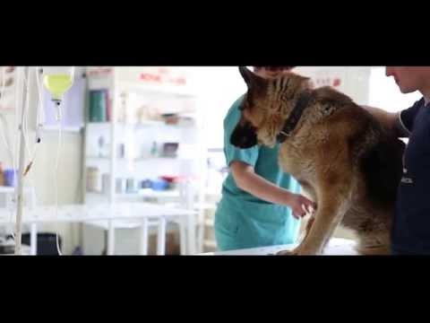 Ветеринарно-диагностический центр