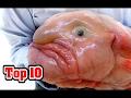 Top 10 lelijkste dieren