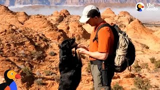 Guy Rescues Puppy Abandoned In Canyon UPDATE | The Dodo by The Dodo