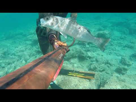 "Spearfishing Croatia - Neo Carbone - ""Shallows"" by Saša Škoko"