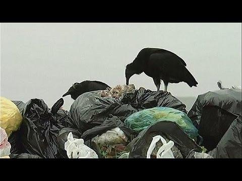 Περού: Γύπες στη μάχη εύρεσης των παράνομων χωματερών – science