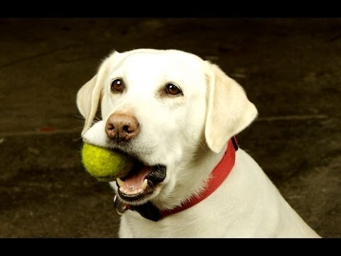 Funny Dogs Playing Fetch By Themselves Compilation 2014 [NEW]