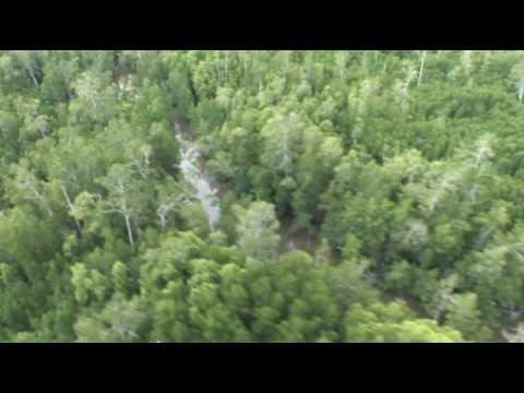 Memantau Hutan Indonesia