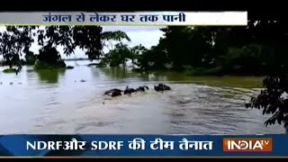 Kaziranga India  city photos gallery : Assam Flood Disturbs Wildlife, Water Enter Kaziranga National Park - India Tv