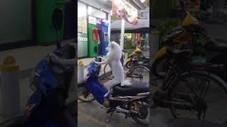 animale caine pe motocicleta