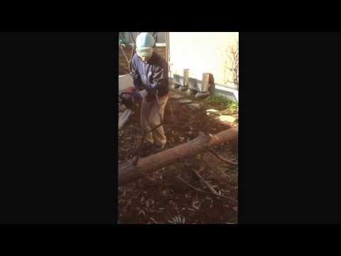 伐採シリーズ