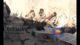 Download Lagu Exclusive Jalalabad Explosion By Sharq Tv 17/01/2016 Mp3