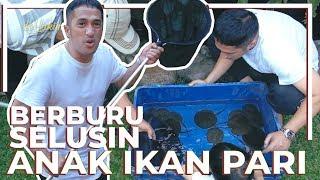 Video BERBURU SELUSIN ANAK IKAN PARI | Fauna Irfan MP3, 3GP, MP4, WEBM, AVI, FLV April 2019