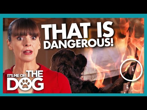 Accident Waiting to Happen As Dog Turns on the Gas! | It's Me or the Dog