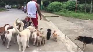 animale cu cainii la plimbare