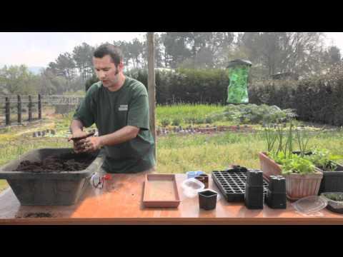 Cómo sembrar calabaza//Balcón comestible//LlevamealhuertoTv