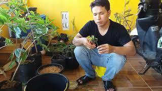 Video INSYA ALLAH SUKSES Cara Stek Tanaman Apapun Menggunakan Nature Stek MP3, 3GP, MP4, WEBM, AVI, FLV Juli 2018