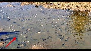 Video Temukan Kubangan Yang Penuh Dengan Ikan Ikan Terjebak MP3, 3GP, MP4, WEBM, AVI, FLV September 2019