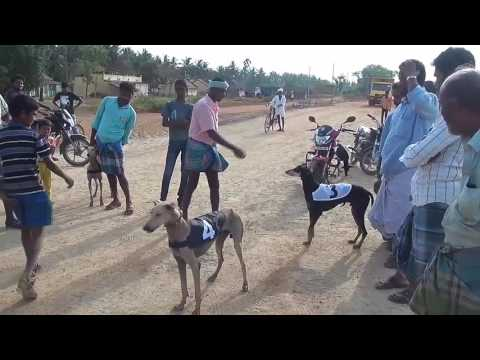 Video Kanni  Dog the Catcher download in MP3, 3GP, MP4, WEBM, AVI, FLV January 2017