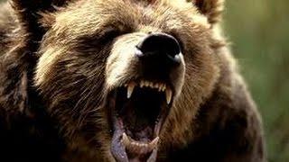 Video National Geographic Predator CSI Bodiless Bears MP3, 3GP, MP4, WEBM, AVI, FLV Februari 2019