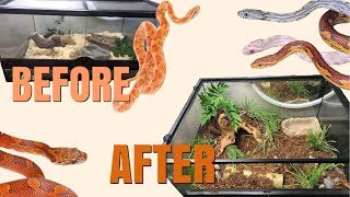 SETTING UP A CORN SNAKE VIVARIUM! by Emma Lynne Sampson
