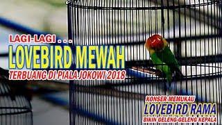 Video Lagi-lagi Lovebird Mewah Terbuang Di Piala Presiden Jokowi 2018 MP3, 3GP, MP4, WEBM, AVI, FLV Maret 2018