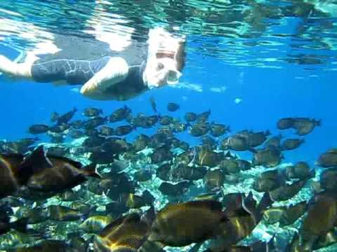 Snorkeling - El Quseir Marsa Alam, Egypt