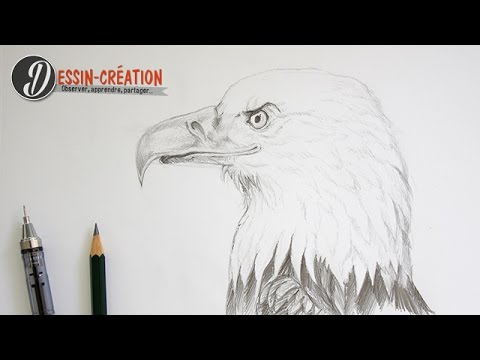 aigle tribal dessin