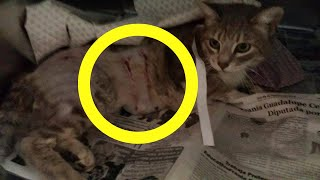 Pregnant Cat Who Survived A Vicious Dog Attack Adopts The Most Unlikely Creature by Did You Know Animals?