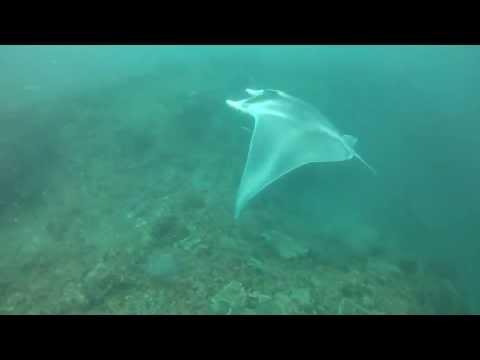 Ningaloo Reef - WA
