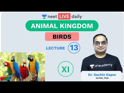 Animal Kingdom - L 13 | Birds | Aves | Unacademy NEET | NEET LIVE DAILY | NEET Biology | Sachin Sir
