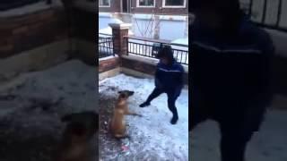 Idiota drażni psa – szybko tego pożałował.