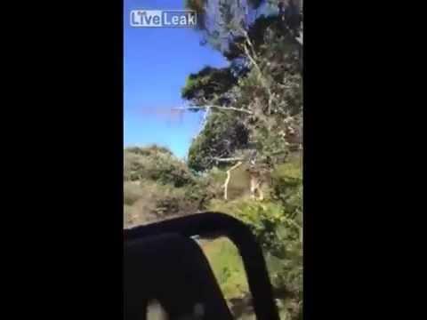 Jirafa ataca al estilo Parque Jurásico